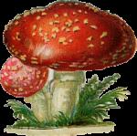 sf_itsamouseworld_icon_mushroom